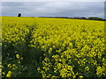 SP7314 : Footpath through a field of oilseed rape by Shaun Ferguson