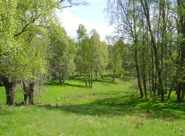 Birch woodland near the South Drive of Finzean House