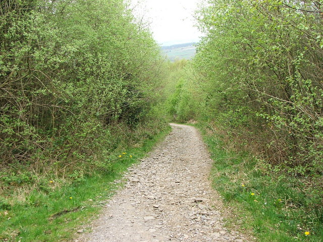 Forest Road, Crynant Forest