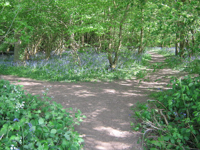 Footpath junction in Shipbourne Wood
