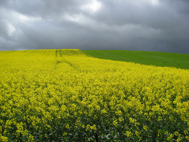Crops change and storm clouds approach