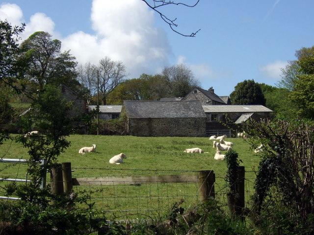 Ty -canol farm