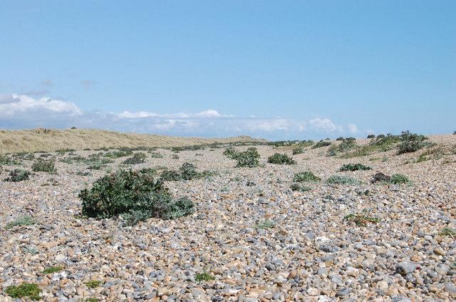 Vegetated Shingle Beach