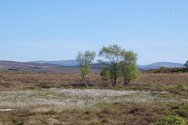 Fairy Circle on High Moor