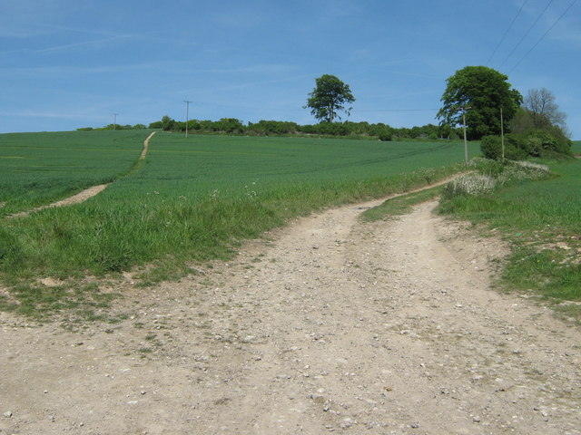 Footpaths on North Downs near Cobham Farm