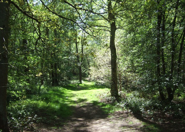 Track through Hanchurch Woods