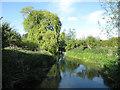 TL3949 : River Cam by Hugh Venables
