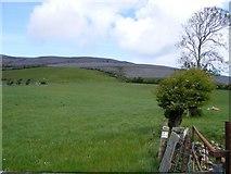 M2606 : Pasture, Kilweelran Townland by Mac McCarron