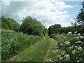 TQ3109 : Path in woods - Patcham by Paul Gillett