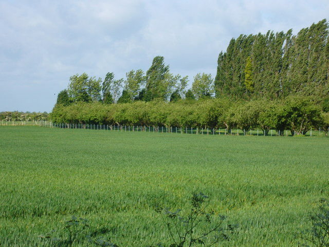 Farmland and Orchard, Wisbech St Mary