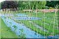 SU6271 : Vegetable garden at Englefield : Week 22