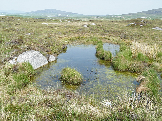 Boggy Pool