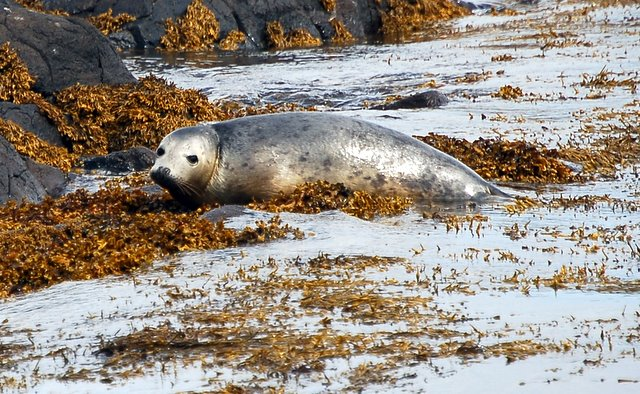 Wildlife on the Isle of May (1)