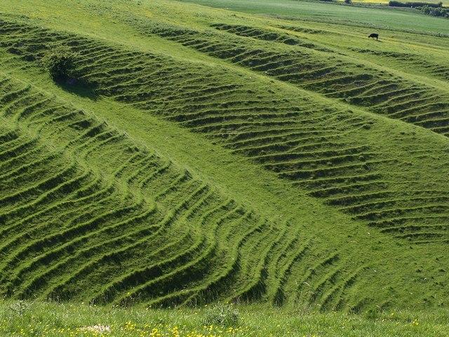 Terracettes Below Morgan S Hill 3 169 Derek Harper Cc By