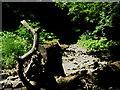 NZ4445 : Hawthorn Burn by peter robinson