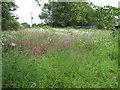 SJ7965 : Wild flower corner by Seo Mise