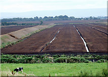N1431 : Peat bog Co.Offaly by Dennis Turner