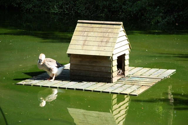 Duck House Richard Croft Geograph Britain And Ireland
