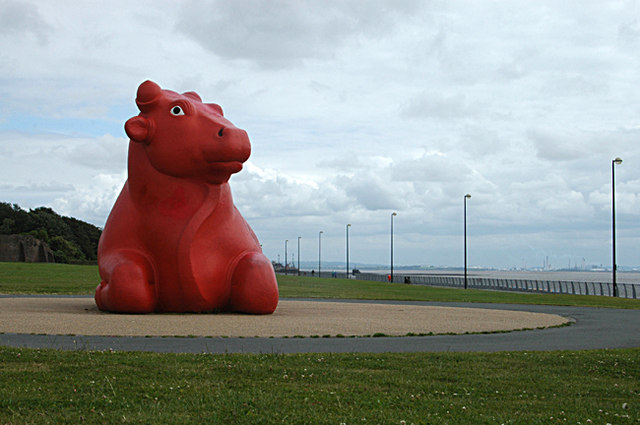 A big red cow