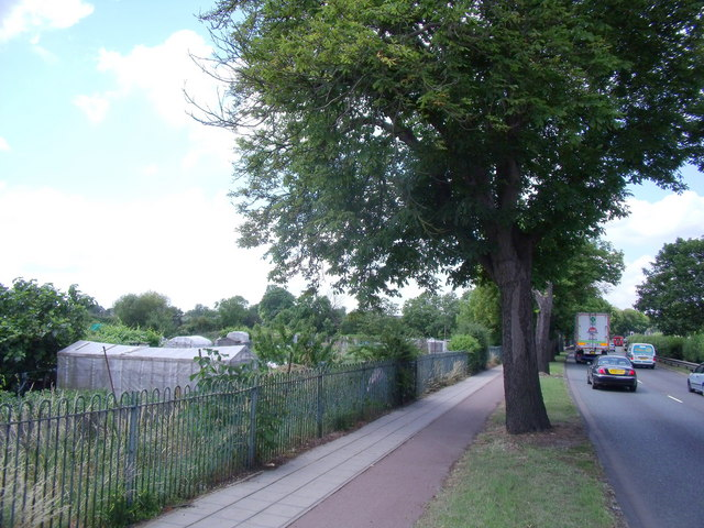 Alongside the allotments on the A10 dual carriageway