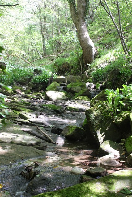 Stream over rocks in woody glade