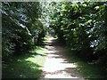 TL4199 : Pathway by Tony Bennett