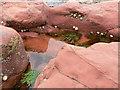 NJ8065 : Rocks, Pools & Limpets : Week 26
