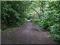 SU8185 : Footpath through Hog Wood by Shaun Ferguson