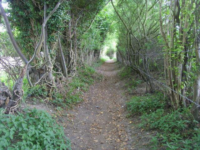 path towards Hatchet Wood