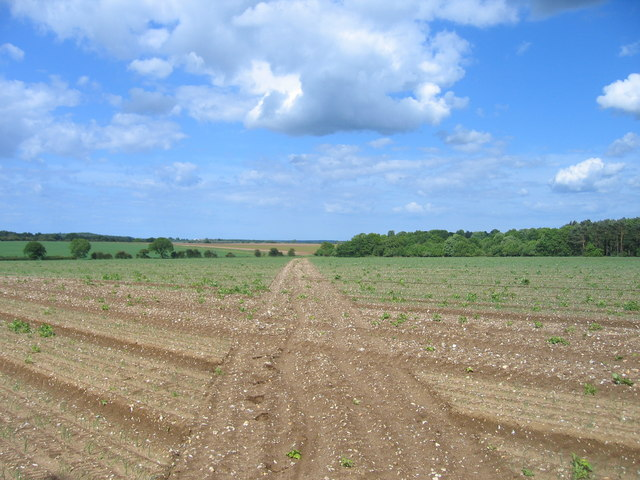 Footpath across arable land
