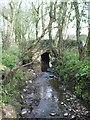 SX3488 : Tributary Stream by Gary McNulty