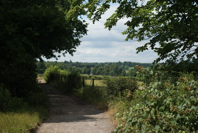 Bridleway on Fetcham Downs