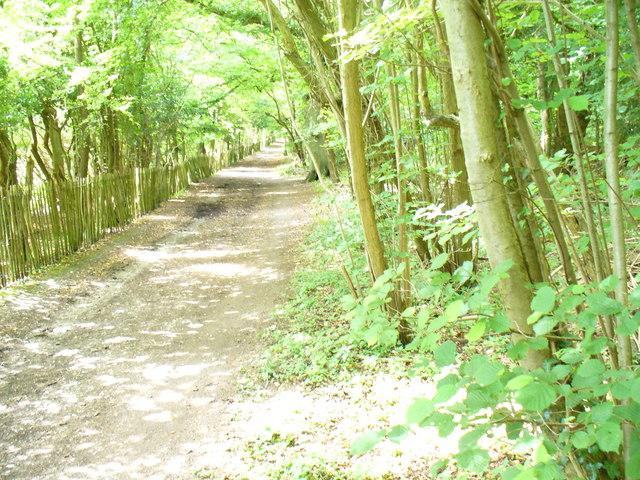 Bridleway in Cherkley Wood
