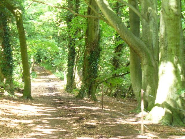 Bridleway near Tyrells Wood