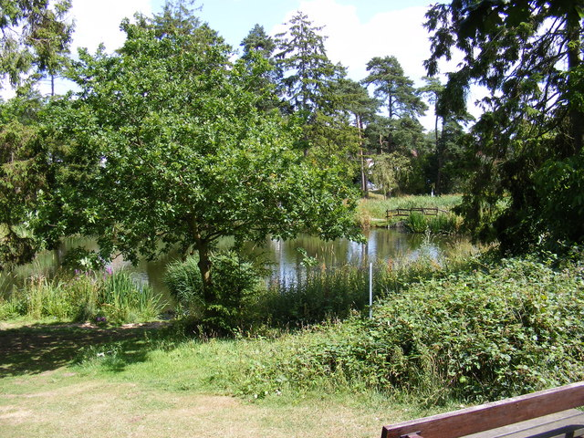 Southdown Ponds on Harpenden Common