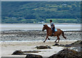 SH5381 : Equestrian exercise, Red Wharf Bay : Week 28