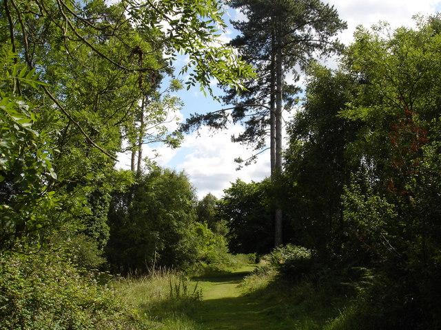 Track in Rendelsham Forest