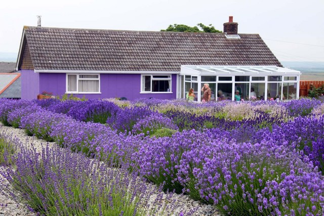 Lavender Blue Cafe Husbands Bosworth