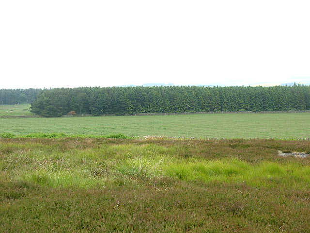 Plantation near Fowberry Mains
