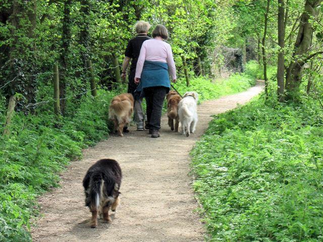 Off Lead Dog Walk Near Graceville