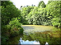 ST6363 : Pond in Lord's Wood by George Evans