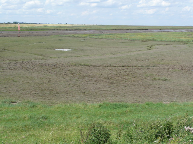 Grazed and ungrazed saltmarsh