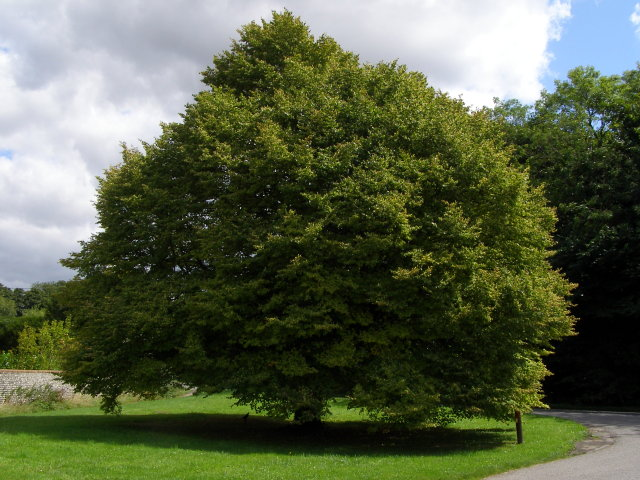 Commemorative tree, Warnford