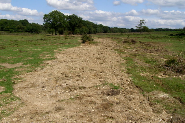 Plugged drainage ditch in Howen Bottom, New Forest