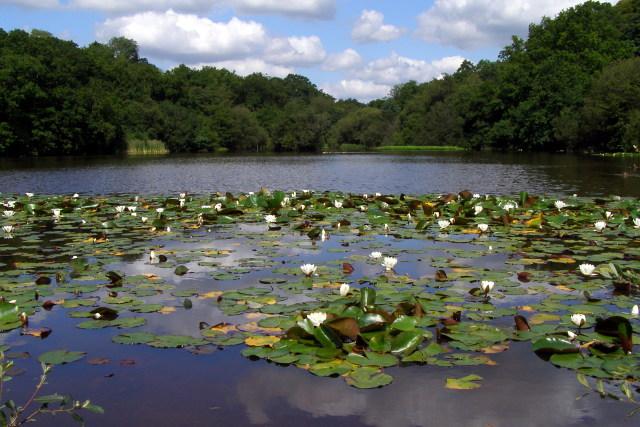 Eyeworth Pond, New Forest