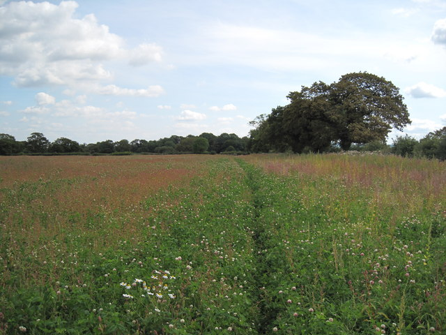 View of Footpath through the Field