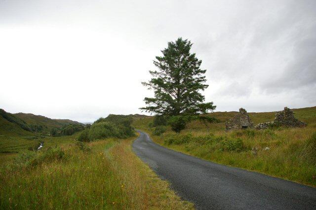 Ruin and tree