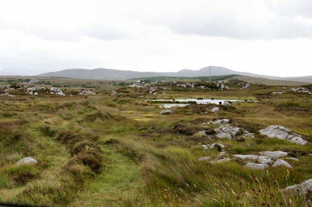 Peat trackway