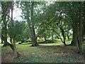 SP3800 : Wood, on Harrowdown Hill by Roger Cornfoot