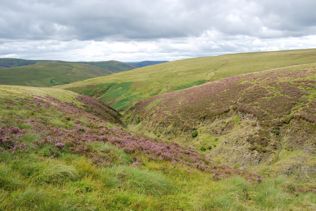 Upper Hare Cleuch with flowering heather in august